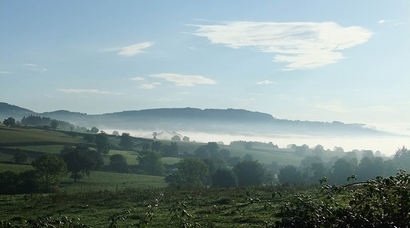 Morning misty view from the cottage